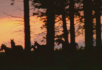 1_ForestHorsesSunset_010015020_55304fd13239e_146_100.png