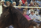54_HorseAuction_015139150_146_100.png